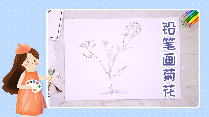 铅笔画菊花
