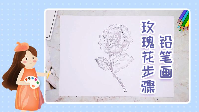 铅笔画玫瑰花的步骤