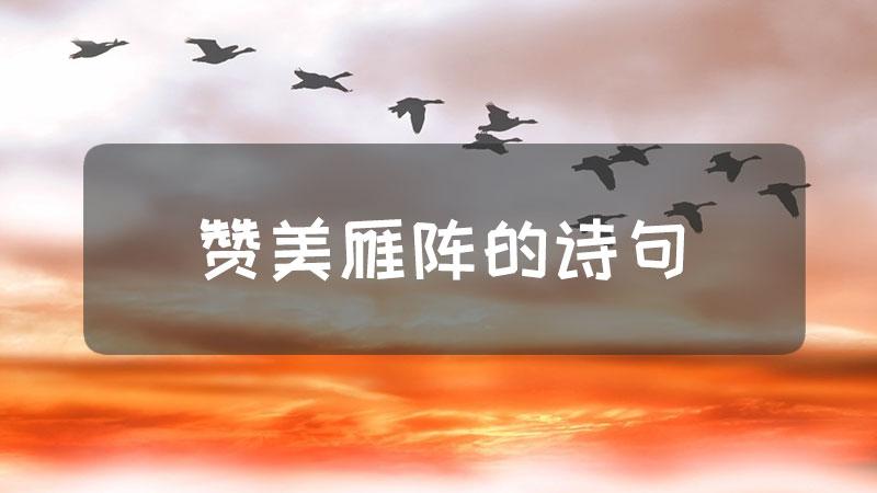 赞美雁阵的诗句