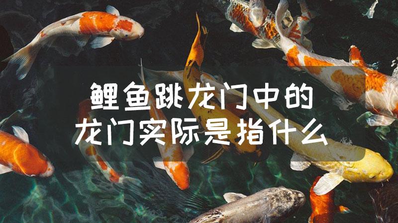 """鲤鱼跳龙门中的""""龙门""""实际是指什么"""