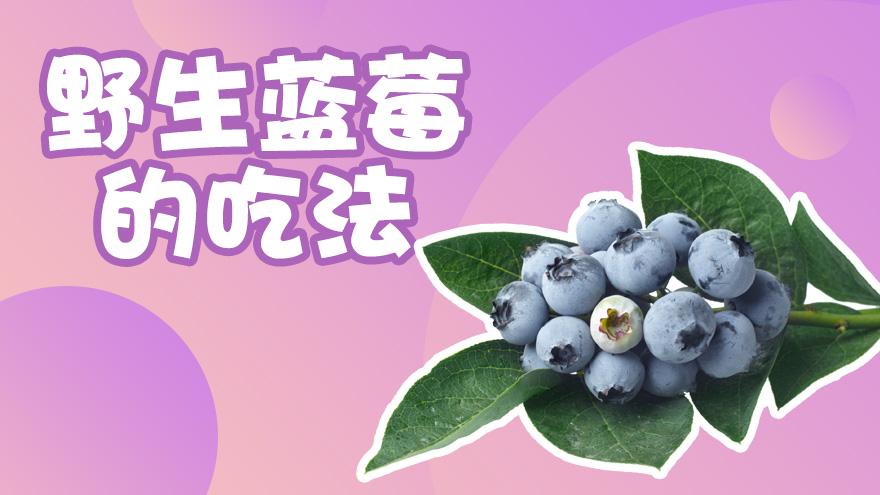 野生蓝莓的吃法