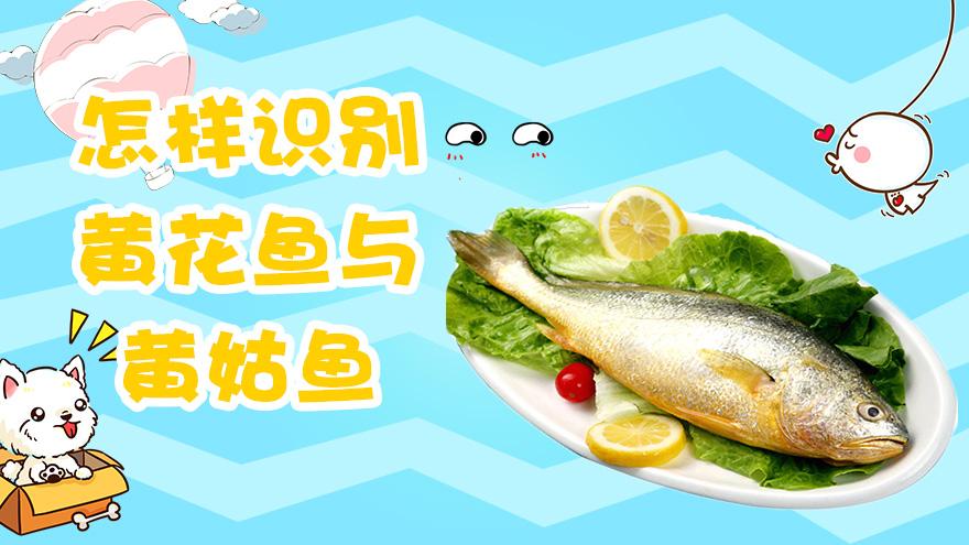 怎样识别黄花鱼与黄姑鱼