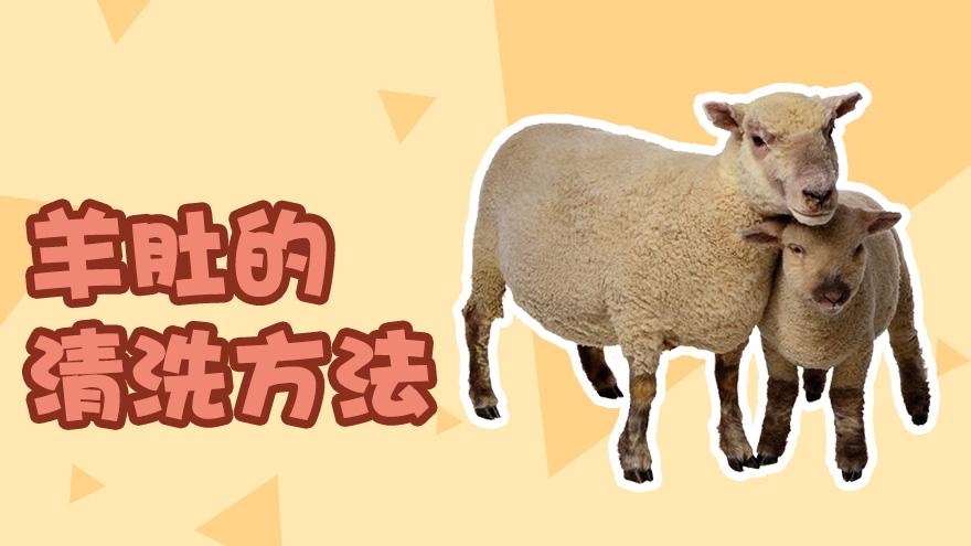 羊肚的清洗方法