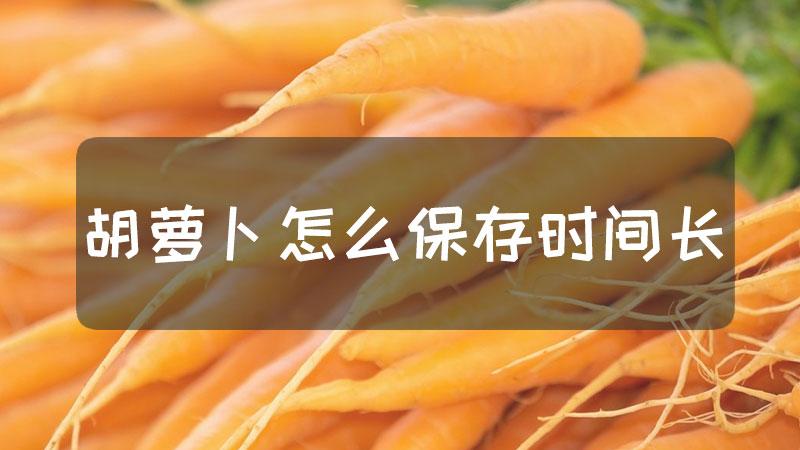 胡萝卜怎么保存时间长