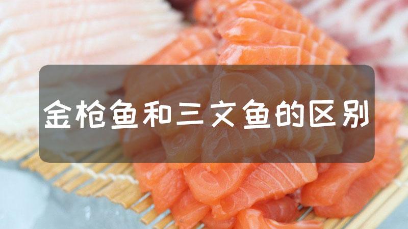 金枪鱼三文鱼区别