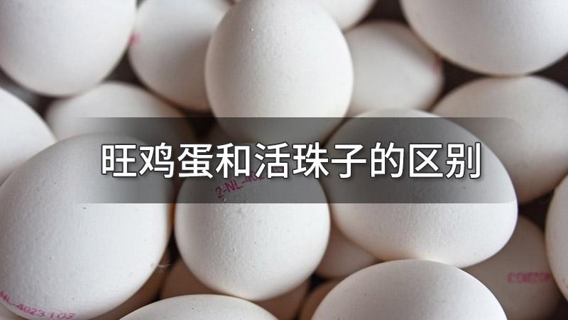 旺鸡蛋和活珠子的区别