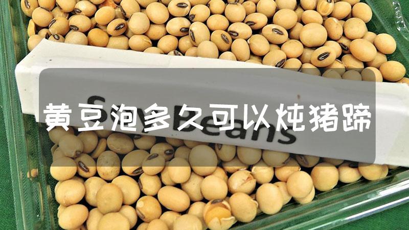 黄豆泡多久可以炖猪蹄