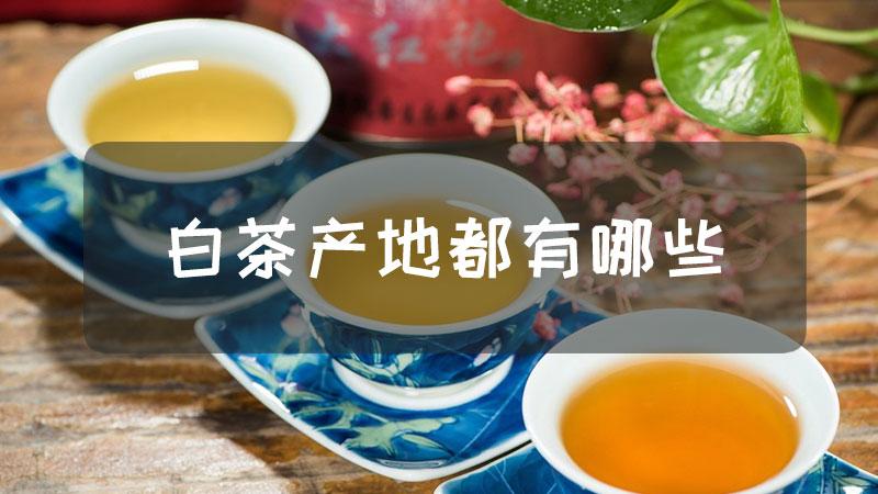 白茶产地都有哪些