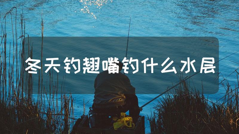 冬天钓翘嘴钓什么水层