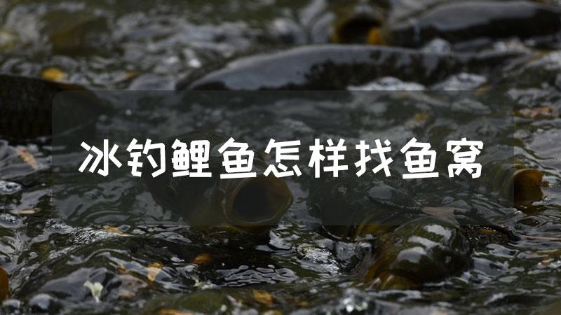 冰钓鲤鱼怎样找鱼窝