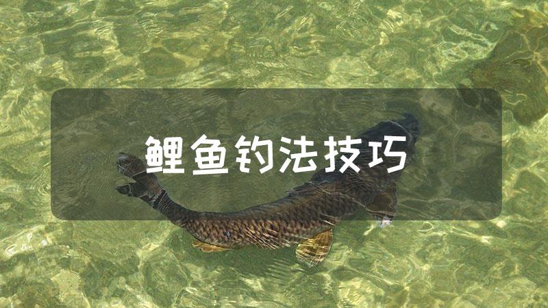 鲤鱼钓法技巧