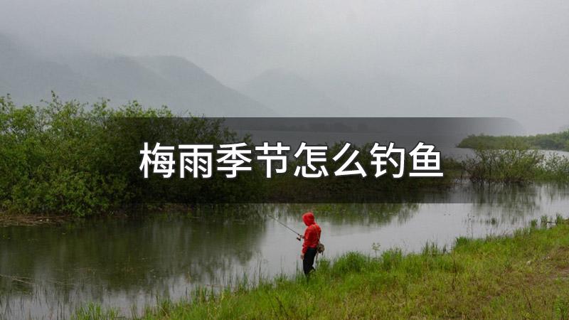 梅雨季节怎么钓鱼