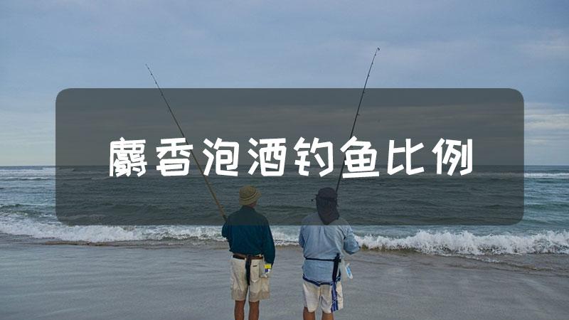 麝香泡酒钓鱼比例