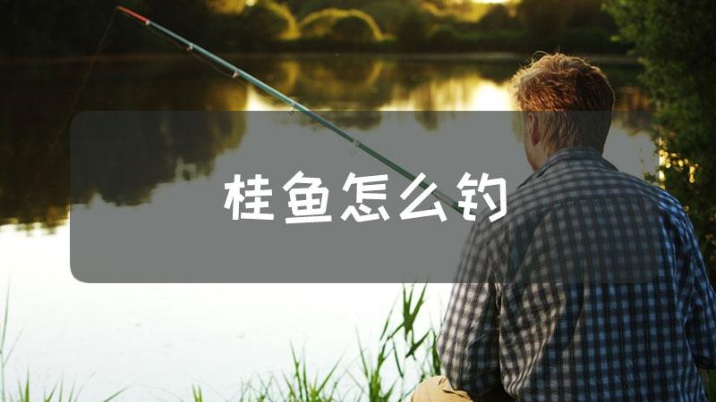 桂鱼怎么钓