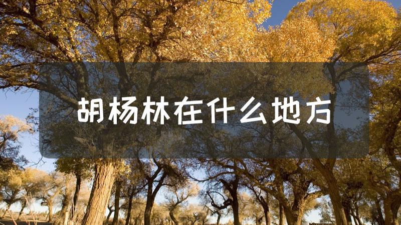 胡杨林在什么地方